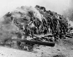 Exponat: Photo: Verbrennung von Leichen in Dresden, 1945