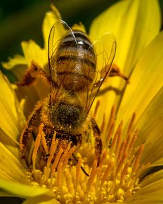 Beautiful Photo by Ernie Echols #photography   #insects   #flowers