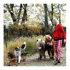 Autumn pyjamaday Sundays      #sunnyday #funday #lovingit #pyjamaday #shetlandpony #pony #ponys #instagirl #instagirls