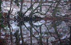 Spiegelung Donoper Teich