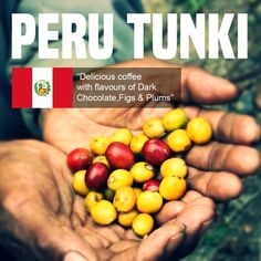 Peru Tunki Green Coffee Beans - Single Origin Speciality Beans For Roasting Bulk Nuts, Coffee Business, Brown Bottles, Single Origin, Roasts, Coffee Roasting, Coffee Beans, Peru, Green Beans