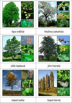 Druhy stromů Autumn Activities For Kids, Nature Activities, Preschool Science, Elementary Science, Montessori, Nature Scavenger Hunts, Tree Identification, Environmental Studies, Autumn Nature