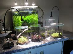Aquarium and terrariums all lit by IKEA Jansjö LED lamps. The 3 on the aquarium are Jansjö wall ights mounted on a frame standing behind the tank.