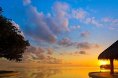 Reconectar con el Alma ... Dra. Gabriella Kortsch: La vida, vivir y el amor