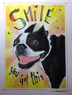 Wonderful Chubbie Chubby Adorable Dog - 8aa24dc31ec084c5598fd5f0d964b565  HD_782559  .jpg