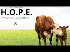 What You Eat Matters new life-changing documentary uncovering and revealing the effects of our typical Western diet on our health the environment Squat, Vegan Documentaries, Malta Beaches, Food Insecurity, Jane Goodall, What You Eat, Yoga, Animal Rights, Personal Development