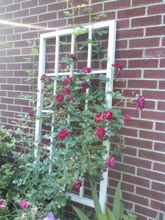 Homemade trellis for the sweet peas at the side of house?  old window frame??