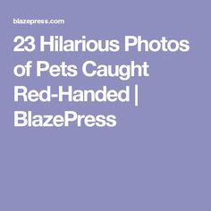 Rare Animals You Might Have Never Seen Before Rare Animals - 23 hilarious photos of pets caught red handed