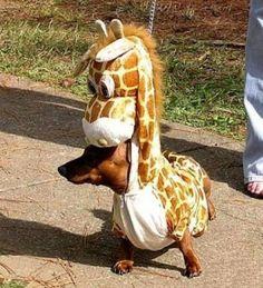 Wiener dog in a giraffe costume haha. @callie didlake pleaaaaase get this for rylee!!!!!!! Hahahaha