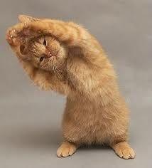 Kitty Yoga haha
