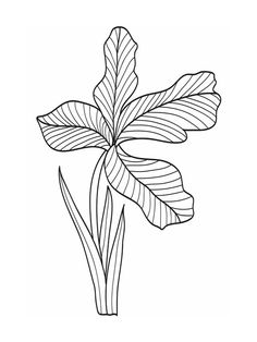 Plant Doodle by atic...