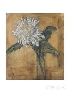 Chrysanthemum, Piet Mondrian 1907 Giclee Print