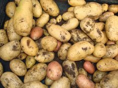 Hiszpańskie Smaki: Tysiąc twarzy ziemniaka, czyli co można z nich ucz...