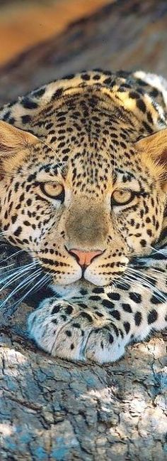 Look what I pinned... Beautiful Cats Pictures Free Download #valuable