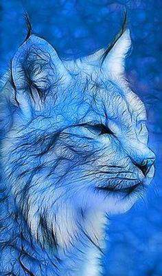 blue Lynx Photo: my first lynx! This Photo was uploaded by artisenens Big Cats, Cool Cats, Art Fractal, Sculpture Painting, Illustration, Wildlife Art, Cat Art, Pet Birds, Pixel Art