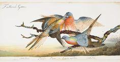 http://www.newyorker.com/magazine/2014/01/06/the-birds-4