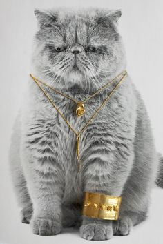 Check Me-owt! 12 Cats Model Fall Jewelry #refinery29 http://www.refinery29.com/cat-jewelry#slide4 Verameat A Hand Necklace, $150, available at Verameat; Verameat Spine Feel Necklace, $98, available at Verameat; Verameat Fox Head Cuff Yah, $260, available at Verameat.