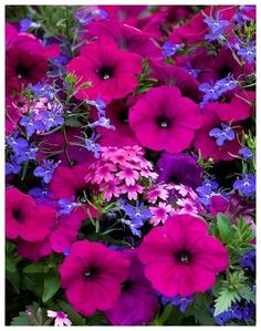 Numerology Spirituality - Terrace Garden - Night in Pompeii flowering container mix with petunia, diascia, and lobelia This time, we will know how to decorate your balcony and your garden easily with plants Get your personalized numerology reading Container Flowers, Flower Planters, Container Plants, Container Gardening, Succulent Containers, Fall Planters, Vegetable Gardening, Organic Gardening, Gardening Tools