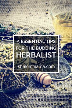 5 Essential Tips for the Budding Herbalist - Shalom Mama