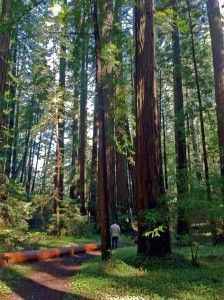 In case you need some inspiration to plan a trip, check out #JenniferBenito's blog about romantic getaways to the redwoods!  #GiantThoughts