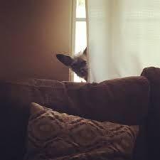 Resultado de imagen para dachshund hi