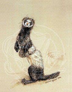 Cute ferret art!