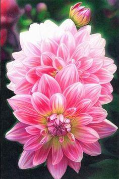 Cynthia Knox    Colored Pencil