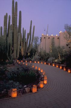 The Luminaria in the Desert Botanical Garden, Phoenix Arizona. Paving the walkway with luminaria would be a lovely touch for a home. Desert Botanical Garden, Botanical Gardens, Landscape Design, Garden Design, Santa Fe Style, Desert Life, Desert Homes, Southwest Style, Holiday Lights