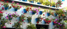El Festival de Patios Cordobeses. Es un concurso celebrado en Córdoba (España), donde los propietarios engalanan sus rejas y balcones con plantas y flores. - www.donquijote.org/cultura/spain/society/holidays/cordoba-patio-festival.asp