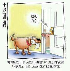 The Lavatory Retriever, the perfect dog for any IBD patient.