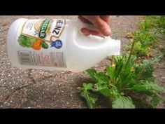 She Made Vinegar In Some Of Her Garden Plants, What Happened In 1 Minute Is Something Unbelievable