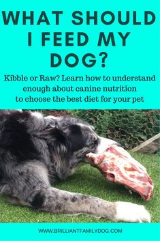 Dog behavior, dog feeding, dog diet, dog health   What should I feed my dog? Kibble, home-cooked, or raw? Learn a bit about canine nutrition and make your own choice    #doghealth, #dogbehavior, #rawfeedingfordogs   www.brilliantfamilydog.com