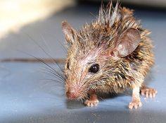Mouse Animal Mouse Wild Life Animal Mice