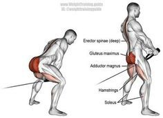 Cable pull through. A compound exercise. Synergistic muscles: Erector Spinae, Hamstrings, Adductor Magnus, Soleus, and Anterior Deltoid. Entraînement Musculaire Cable pull-through exercise guide and videos Cable Workout, Butt Workout, Cable Machine Workout, Deltoid Workout, Glutes Workout Men, Glute And Hamstring Workout, Weight Training, Weight Lifting, Weight Loss