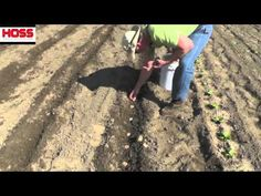 Planting Red 'Taters' - Take a look at how we cut up our red seed potatoes and plant them using the Hoss Double Wheel Hoe with Plow Attachments.