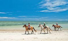 Cavalos na direção de Moreré, ilha de Boipeba, Bahia