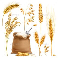 Buy Realistic Agricultural Crops Set by macrovector on GraphicRiver. Set of realistic agricultural crops including rice, oats, wheat, barley, sack of flour isolated vector illustration Rice Packaging, Apples To Apples Game, Car Accessories For Girls, Free Graphics, Graphic Illustration, Vector Illustrations, Portfolio Design, Book Design, Free Food