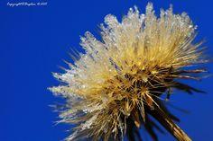 Crystal by Bogdan D Photographer on 500px