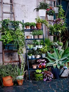 A plant stand in the shape of a ladder. Filled with plant pots in terracotta and galvanized steel and green plants. Ikea Outdoor, Outdoor Plants, Outdoor Plant Stands, Green Plants, Potted Plants, Plant Pots, Ikea Exterior, Terrazas Chill Out, Ikea Garden Furniture
