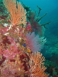 Coral Reefs | The Ocean Foundation