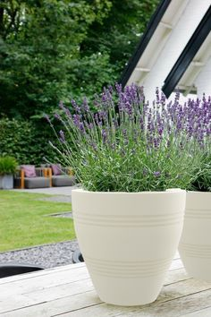 https://www.yuccabeitalia.com/ These planters are decently valued and are currently days accessible effortlessly with various greenery enclosure suppliers. #Planters