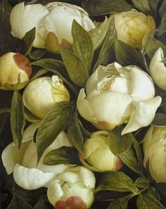 treselise:  White Peonies by Mia Tarney