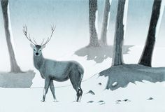 Winter Stag  A beautifu Stag in the woods Home Decor  by teconlene, $22.00