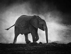 #Moda: #Tips and Tricks for Black and White Wildlife Photography da  (link: http://ift.tt/1TnRYxE )