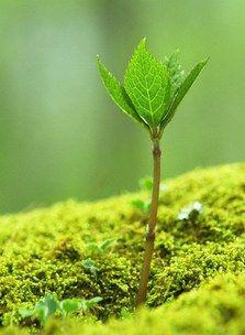 Les boisés enivrants - Eaux fraîches pour l'été - Vibrez sous les flux humides venus du fond des forêts, qui fleurent bon la mousse de chêne et la profonde racine. Comme l'explique Olivier Polge, Nez chez IFF, (créateur d' Ungaro Homme...