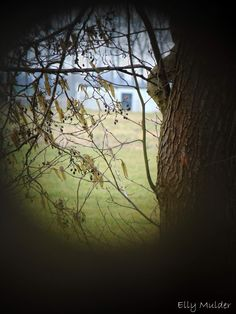 Doorkijkje... #fotografie #natuur #landelijk #boom #weiland #B&B #Workum #Friesland