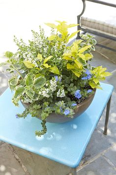 Charming and Subtle - Summer Container Gardens We're Obsessing Over - Southernliving. This pretty, delicate container plays with shades of white, garden green, lime green, and cornflower blue to create a subtle, playful garden element.
