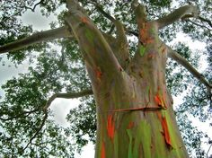 1 Tree Grows an Insane Amount of Colors AT ONCE