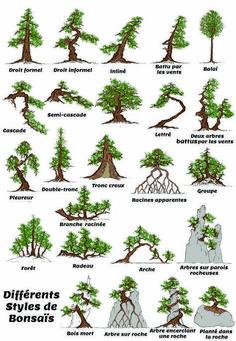 Providing the best care to your bonsai tree will help prolong its life – find out how. Bonsai Tree Care, Bonsai Tree Types, Indoor Bonsai Tree, Bonsai Pruning, Bonsai Plants, Garden Terrarium, Bonsai Garden, Multiplier Des Plantes Grasses, Espalier