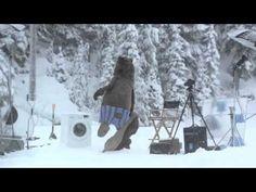▶ Huge Bear Surprises Samsung Crew on EcoBubble washing machine Photo Shoot in BC - YouTube